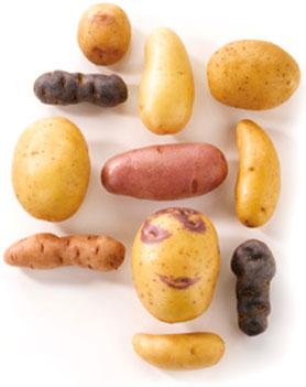 Pommes de terre pour pommes de terre frites/ /utilisable /également pour b/âtonnets de carotte Crudit/è de concombres